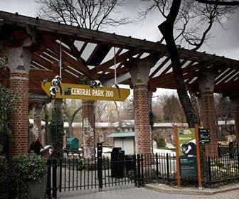Central-Park-Zoo-New-York