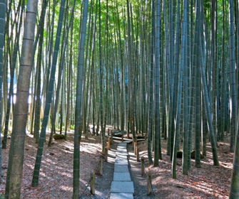Templo-Hokokuji