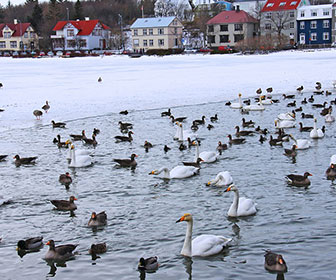 Tjornin-Pond-Reikiavik