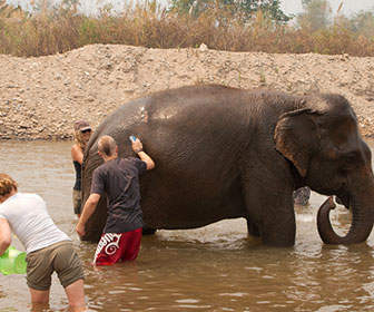 elefantes-en-chiangmai