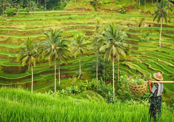 Câte zile arată Bali? Revizuirea zilelor recomandate pentru a vedea Bali