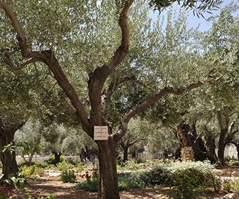 monte-de-los-olivos-en-jerusalem