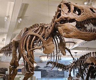 museo-historia-natural-nueva-york